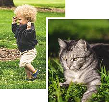 show our products are safe for children & pets